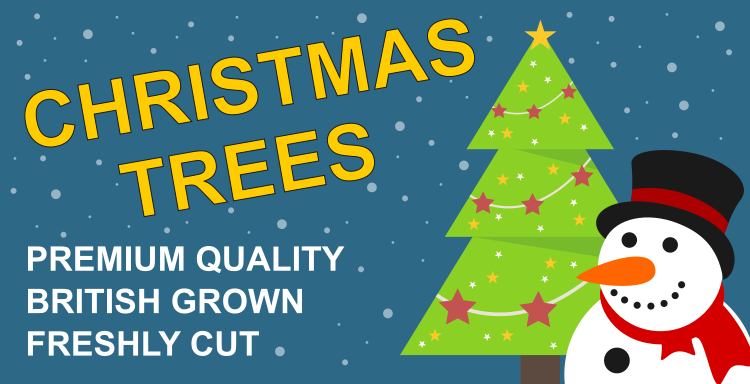 Premium Nordmann Fir non drop Christmas Trees